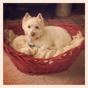 duncan in the red basket